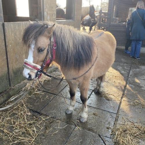 Poney de la ferme de la Gavotte à Grand-Lancy