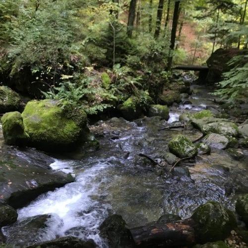 La rivière qui serpente entre les pierres