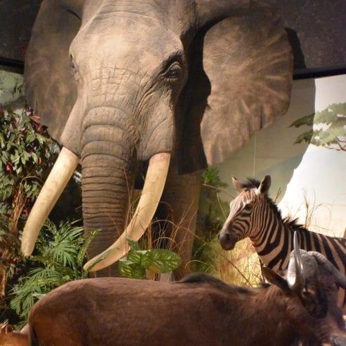 diorama de l'Afrique