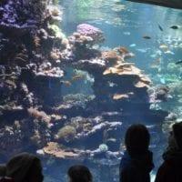 devant l'aquarium