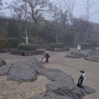 les statues des manchots